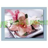 ACR002 - 蕙蘭襟花 (10 個)